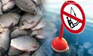 З 1 квітня по 30 червня на Миколаївщині забороняють ловити рибу