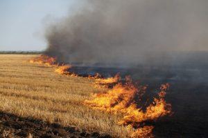 За підпал сухої трави штрафуватимуть на 6 тисяч гривень